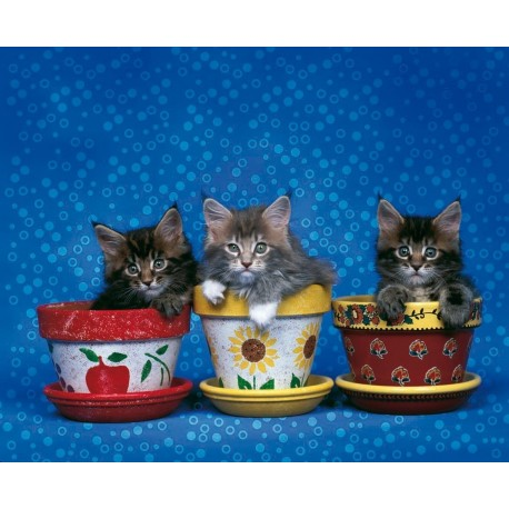Puzzle The Kittens Brothers - 1000 piezas Clementoni 30759