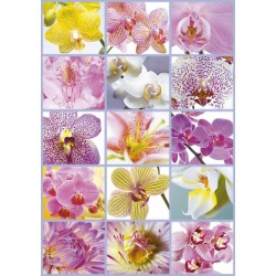 Puzzle Collage De Flores - 1500 piezas Educa 16302