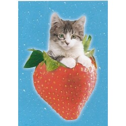 Puzzle Strawberry Kitten - 500 piezas Clementoni 30260